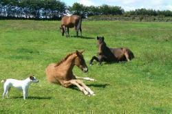 Brendon Hill foals relaxing